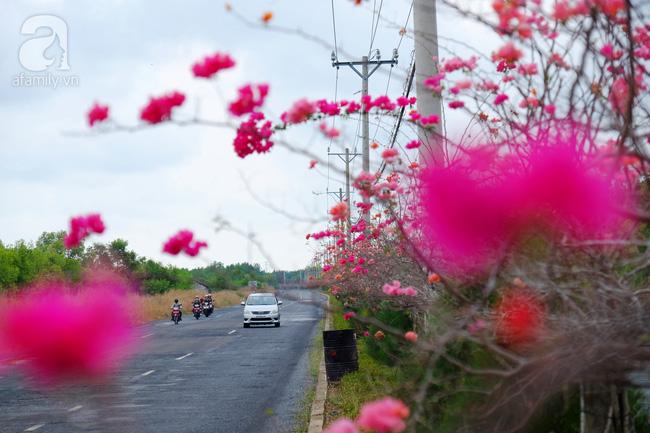 Ven Sài Gòn, có một con đường thơ mộng ngập tràn hoa giấy - Ảnh 9.