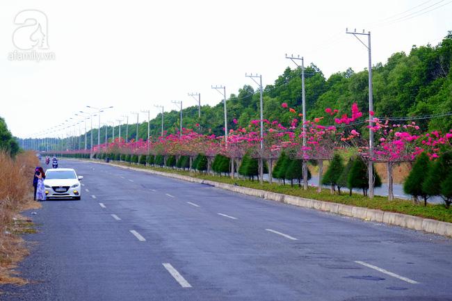 Ven Sài Gòn, có một con đường thơ mộng ngập tràn hoa giấy - Ảnh 1.