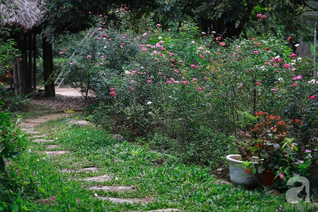 Nhà vườn xanh mát bóng cây, hoa nở đẹp cách Hà Nội 45 phút chạy xe - Ảnh 2