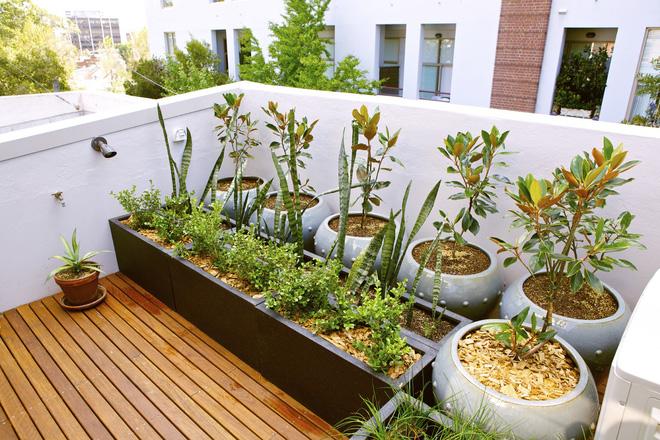 9 khu vườn trên sân thượng vừa đẹp, vừa dễ làm, rất hợp với nhà nhỏ - Ảnh 5.