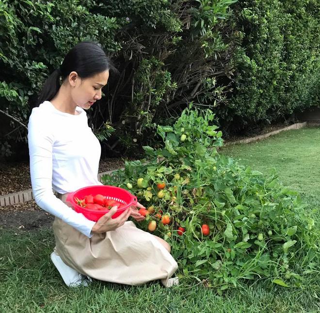 Cận cảnh khu vườn có nhiều loại rau củ Việt của hoa hậu Dương Mỹ Linh trên đất Mỹ - Ảnh 1.