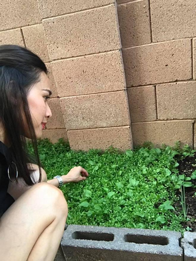 Cận cảnh khu vườn có nhiều loại rau củ Việt của hoa hậu Dương Mỹ Linh trên đất Mỹ - Ảnh 4.