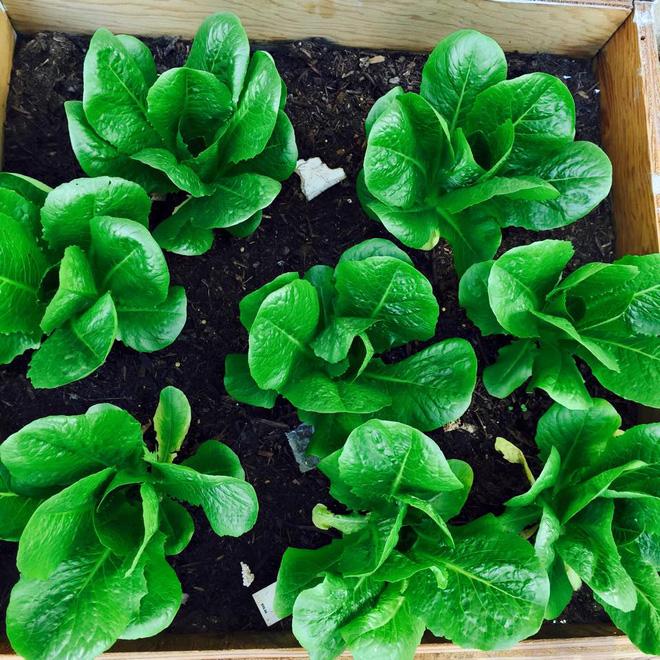 Cận cảnh khu vườn có nhiều loại rau củ Việt của hoa hậu Dương Mỹ Linh trên đất Mỹ - Ảnh 10.