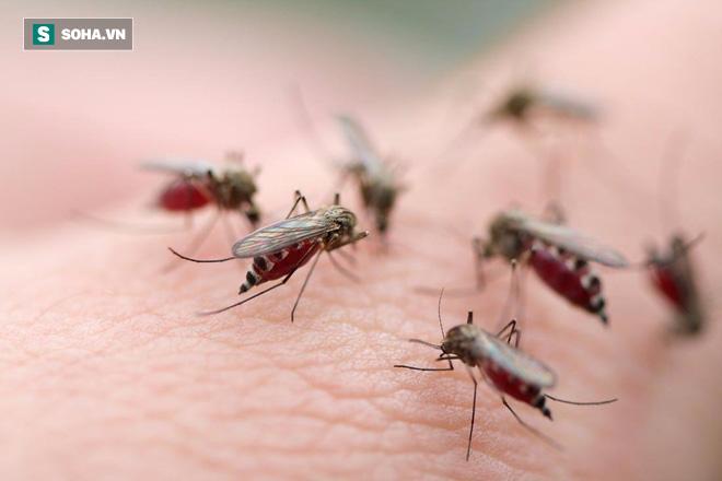 Chuyên gia cảnh báo: Mắc sốt xuất huyết, tuyệt đối không làm 1 việc kẻo bệnh nặng thêm đấy! - Ảnh 2.