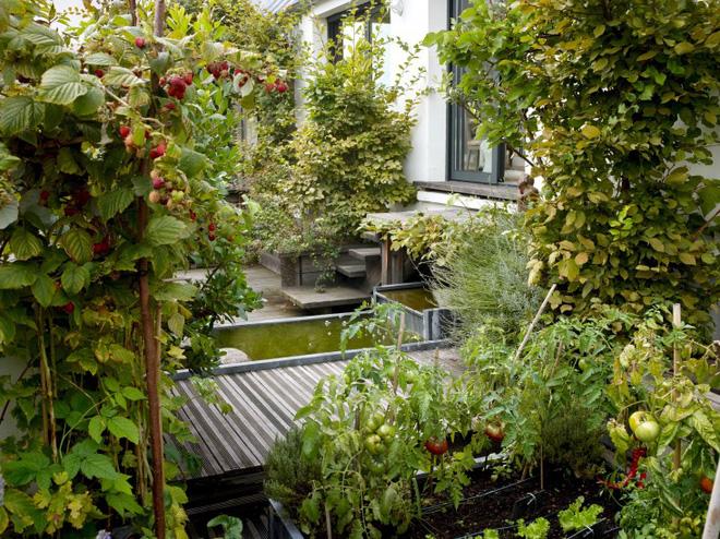 Khu vườn trên mái nhà ngập tràn cây trái với hướng nhìn thẳng ra tháp Eiffel - Ảnh 2.