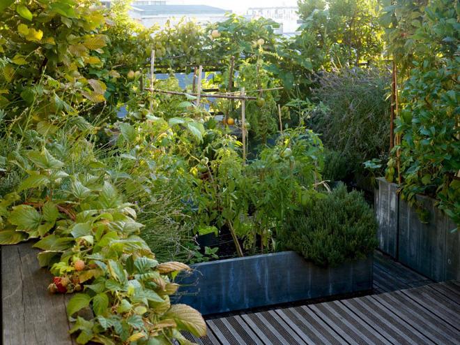 Khu vườn trên mái nhà ngập tràn cây trái với hướng nhìn thẳng ra tháp Eiffel - Ảnh 3.