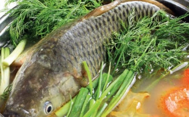 Có nên nuốt mật cá trắm chữa bệnh? - Ảnh 1.