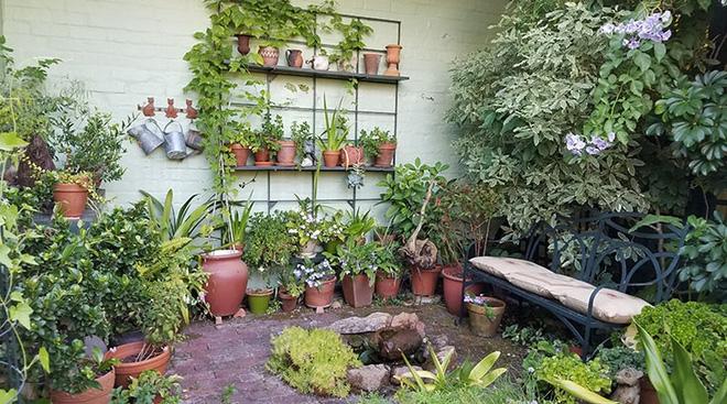 Khu vườn địa đàng của cụ bà 83 tuổi đã dành 33 năm để thỏa mãn tình yêu với cây và hoa - Ảnh 18.