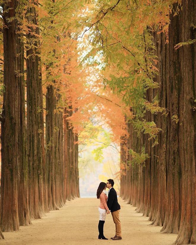 Mùa cưới đến rồi, bỏ túi ngay những địa chỉ chụp ảnh đẹp mê ly với lá vàng, lá đỏ này thôi - Ảnh 10.