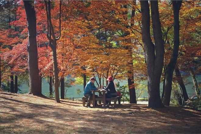 Mùa cưới đến rồi, bỏ túi ngay những địa chỉ chụp ảnh đẹp mê ly với lá vàng, lá đỏ này thôi - Ảnh 9.