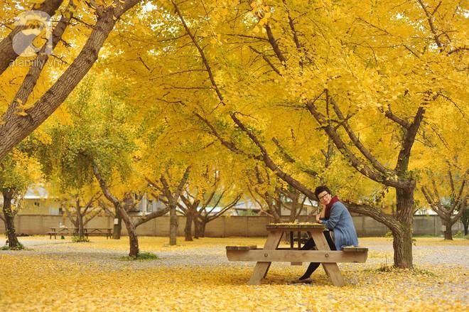 Mùa cưới đến rồi, bỏ túi ngay những địa chỉ chụp ảnh đẹp mê ly với lá vàng, lá đỏ này thôi - Ảnh 7.