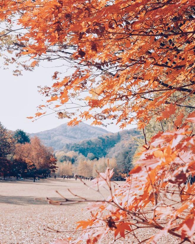 Mùa cưới đến rồi, bỏ túi ngay những địa chỉ chụp ảnh đẹp mê ly với lá vàng, lá đỏ này thôi - Ảnh 6.