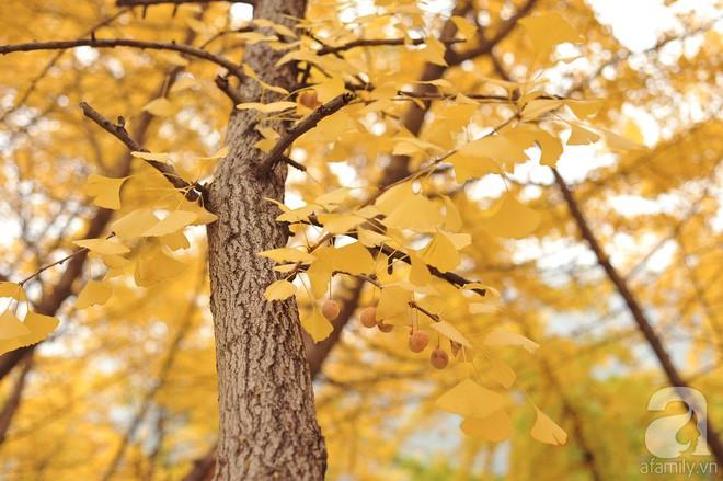 Mùa cưới đến rồi, bỏ túi ngay những địa chỉ chụp ảnh đẹp mê ly với lá vàng, lá đỏ này thôi - Ảnh 8.