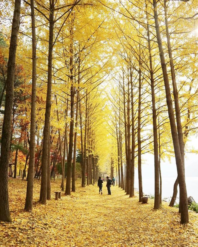 Mùa cưới đến rồi, bỏ túi ngay những địa chỉ chụp ảnh đẹp mê ly với lá vàng, lá đỏ này thôi - Ảnh 5.