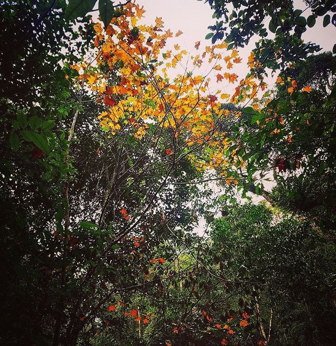 Mùa cưới đến rồi, bỏ túi ngay những địa chỉ chụp ảnh đẹp mê ly với lá vàng, lá đỏ này thôi - Ảnh 16.