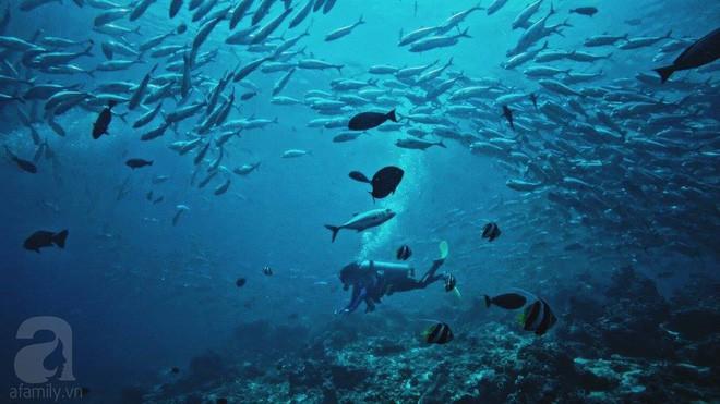 Cô gái Việt đến đảo thiên đường Sipadan bơi cùng cá mập, ở resort hạng sang, ăn buffet xả láng cả tuần với 12 triệu - Ảnh 7.