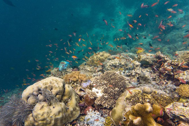 Cô gái Việt đến đảo thiên đường Sipadan bơi cùng cá mập, ở resort hạng sang, ăn buffet xả láng cả tuần với 12 triệu - Ảnh 12.