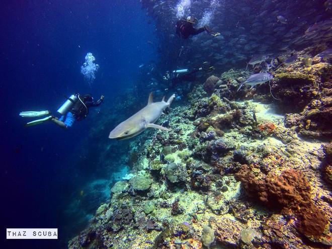 Cô gái Việt đến đảo thiên đường Sipadan bơi cùng cá mập, ở resort hạng sang, ăn buffet xả láng cả tuần với 12 triệu - Ảnh 11.