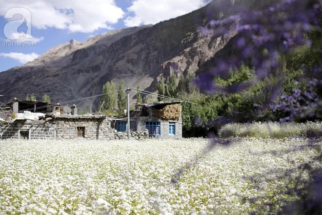 Cánh đồng oải hương và tam giác mạch đẹp như tiên cảnh ở ngôi làng bị lãng quên - Ảnh 11.