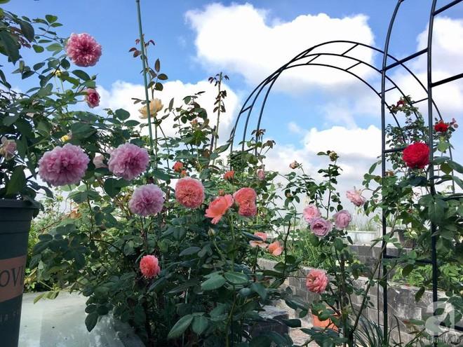 3 vườn hồng đẹp như mơ khiến độc giả tâm đắc tặng ngàn like trong năm 2017 - Ảnh 26.