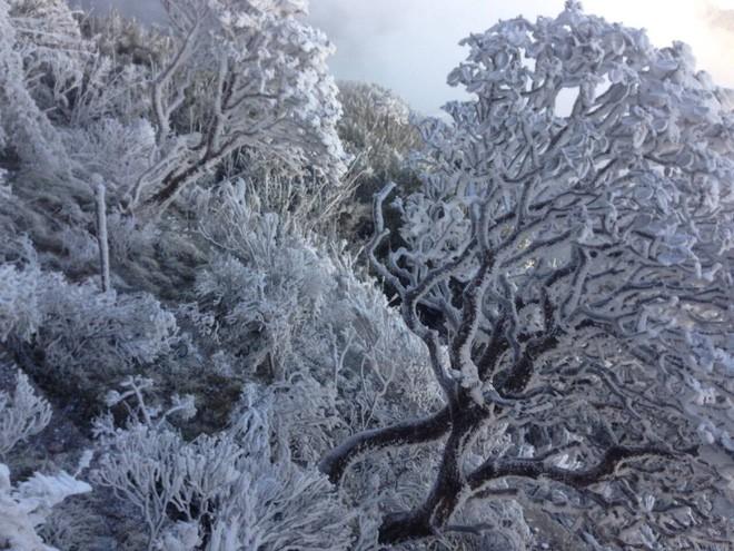 Đỉnh Fansipan trắng xóa băng tuyết khi nhiệt độ trong đêm giảm xuống -7 độ C - Ảnh 1.