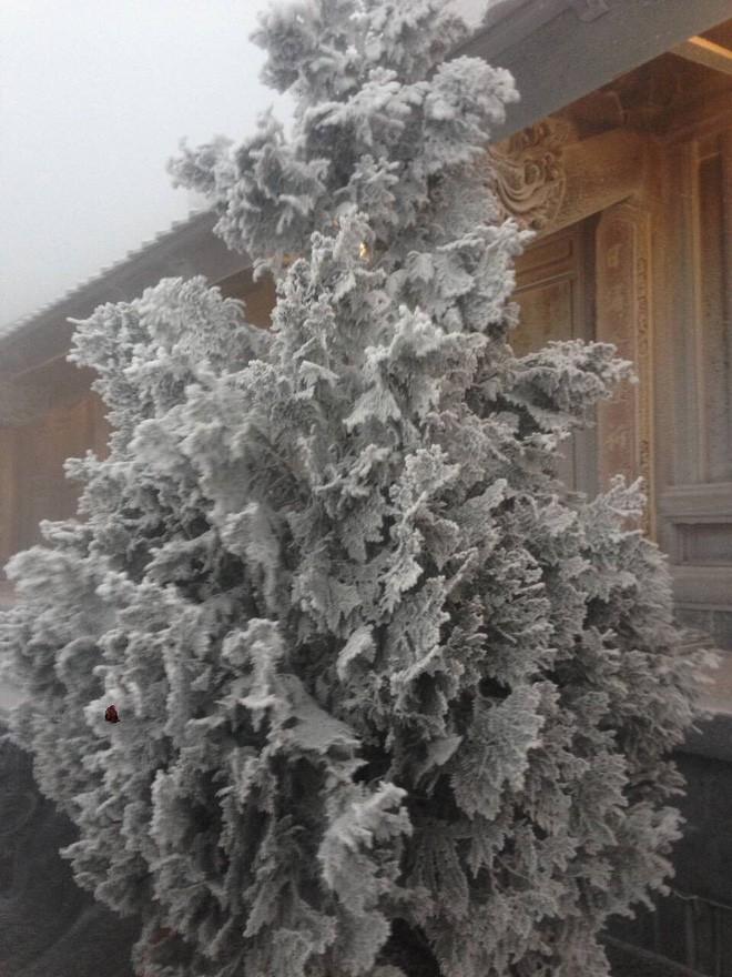 Đỉnh Fansipan trắng xóa băng tuyết khi nhiệt độ trong đêm giảm xuống -7 độ C - Ảnh 2.