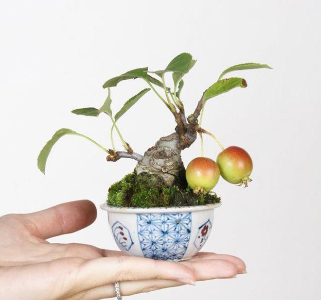 10 chậu bonsai cây ăn trái mini siêu đẹp dùng trang trí nhà dịp Tết - Ảnh 5.
