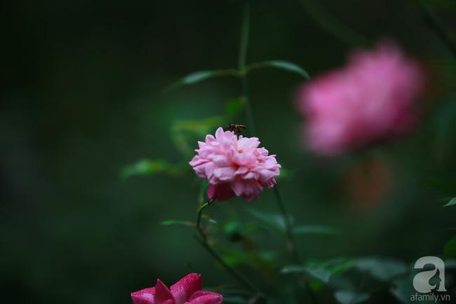 Nhà vườn xanh mát bóng cây, hoa nở đẹp cách Hà Nội 45 phút chạy xe - Ảnh 11