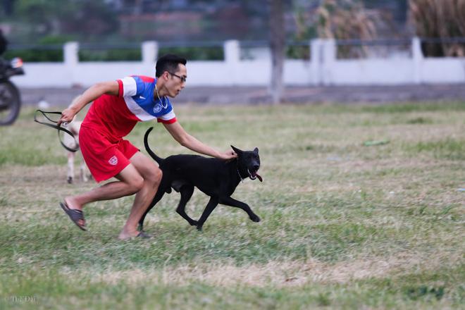 Hà Nội: Chó vẫn thả rông, không rọ mõm trước ngày luật bắt chó có hiệu lực - Ảnh 11.