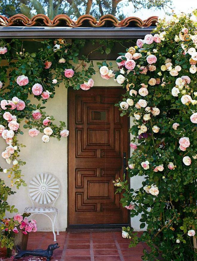 Mãn nhãn với những ngôi nhà có dàn hoa leo, ai đi qua cũng phải dừng chân ngắm nhìn - Ảnh 11.