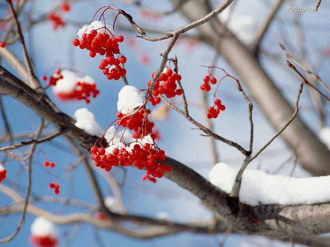 Ngất ngây với những hình ảnh tuyết rơi đẹp lung linh trên khắp thế giới - Ảnh 11.