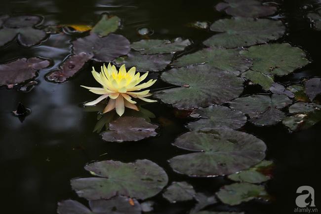 Nhà vườn xanh mát bóng cây, hoa nở đẹp cách Hà Nội 45 phút chạy xe - Ảnh 12