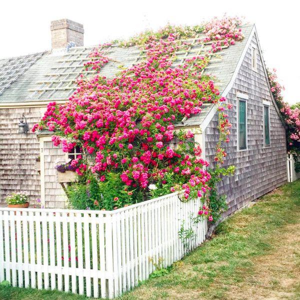 Mãn nhãn với những ngôi nhà có dàn hoa leo, ai đi qua cũng phải dừng chân ngắm nhìn - Ảnh 12.