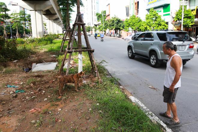 Hà Nội: Chó vẫn thả rông, không rọ mõm trước ngày luật bắt chó có hiệu lực - Ảnh 13.