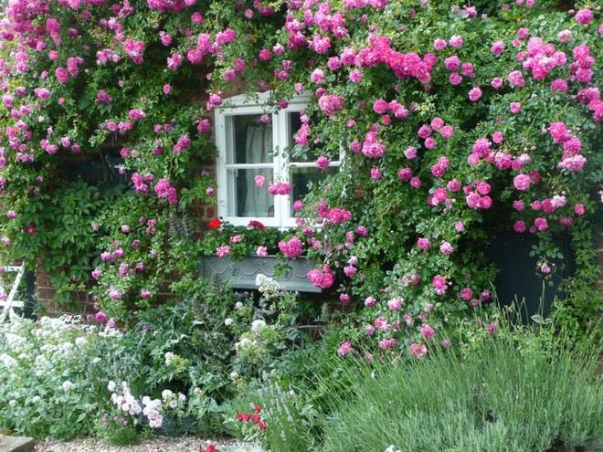 Mãn nhãn với những ngôi nhà có dàn hoa leo, ai đi qua cũng phải dừng chân ngắm nhìn - Ảnh 13.