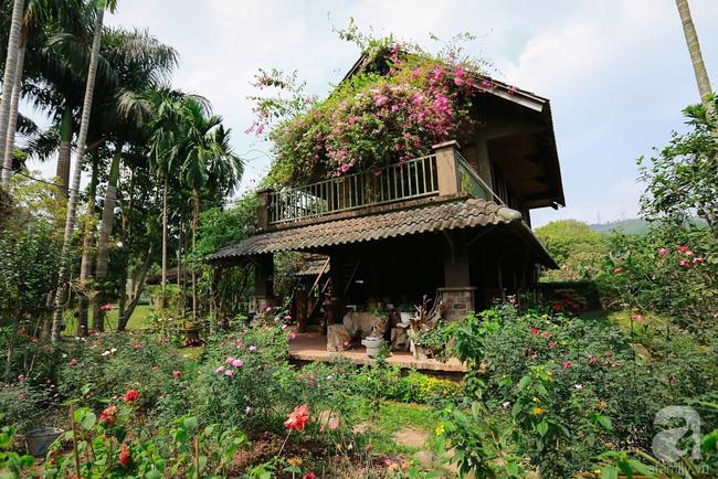 Nhà vườn xanh mát bóng cây, hoa nở đẹp cách Hà Nội 45 phút chạy xe - Ảnh 14