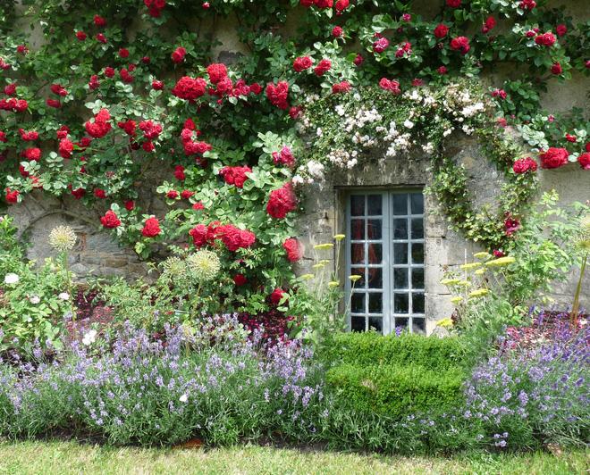 Mãn nhãn với những ngôi nhà có dàn hoa leo, ai đi qua cũng phải dừng chân ngắm nhìn - Ảnh 14.
