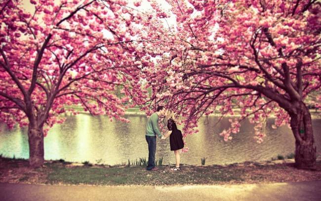 Ngây ngất trước mùa hoa anh đào đẹp tuyệt trần ở xứ Phù Tang