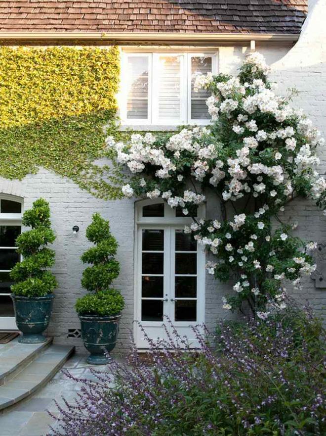 Mãn nhãn với những ngôi nhà có dàn hoa leo, ai đi qua cũng phải dừng chân ngắm nhìn - Ảnh 15.