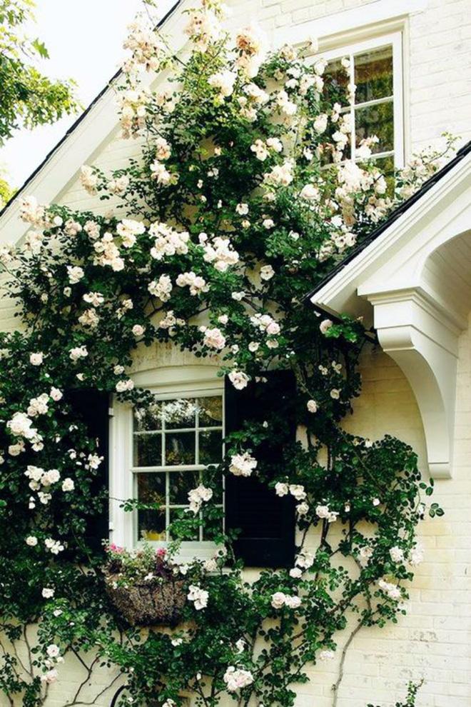 Mãn nhãn với những ngôi nhà có dàn hoa leo, ai đi qua cũng phải dừng chân ngắm nhìn - Ảnh 16.