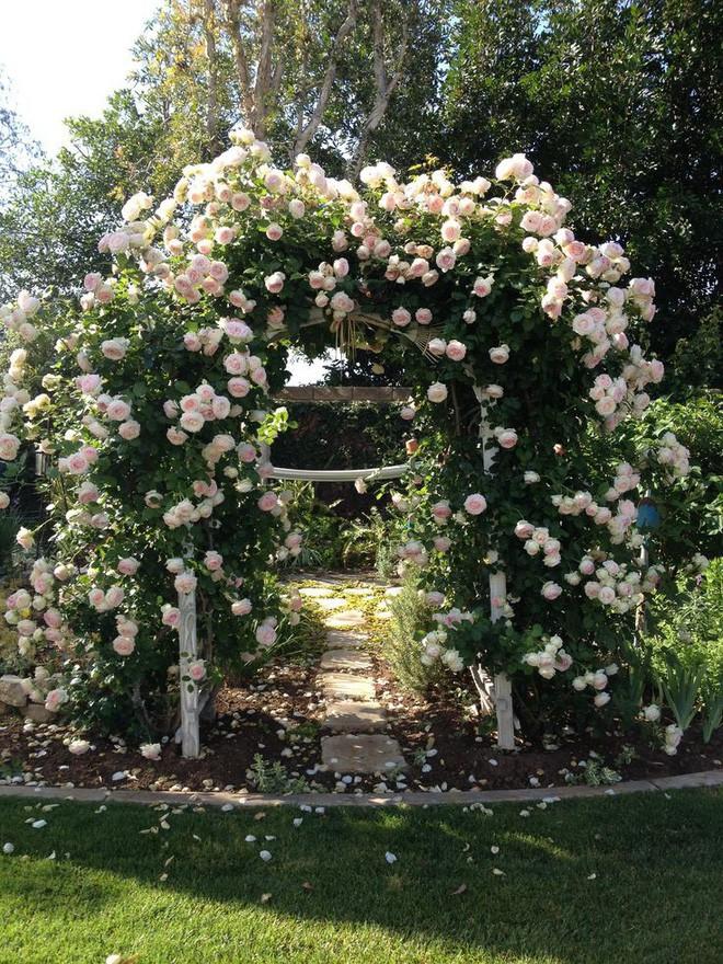 Chiêm ngưỡng vẻ đẹp lộng lẫy của những chiếc cổng nhà tràn ngập hoa - Ảnh 14.