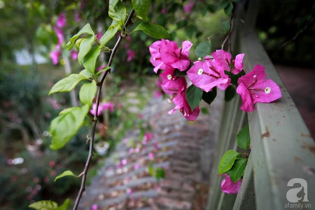 Nhà vườn xanh mát bóng cây, hoa nở đẹp cách Hà Nội 45 phút chạy xe - Ảnh 17