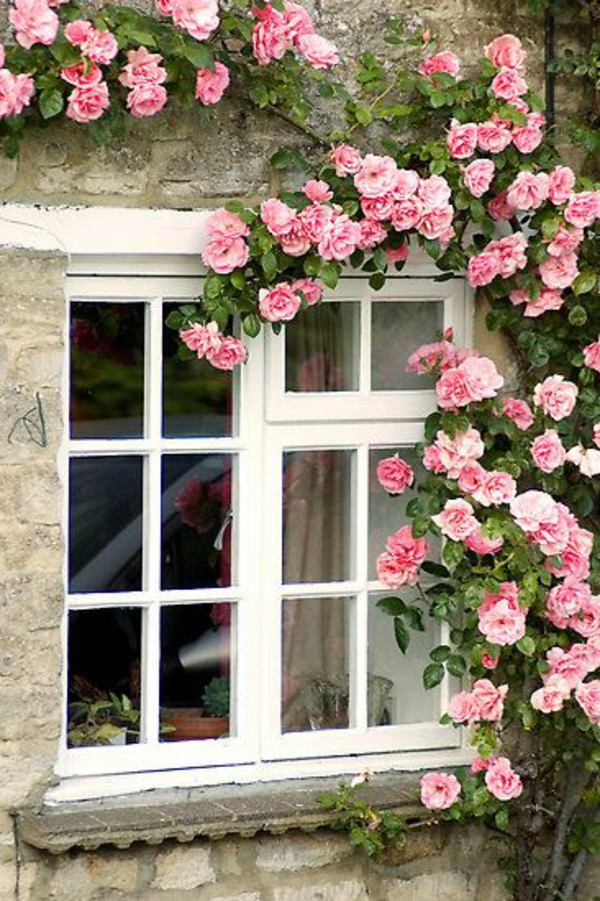 Mãn nhãn với những ngôi nhà có dàn hoa leo, ai đi qua cũng phải dừng chân ngắm nhìn - Ảnh 17.
