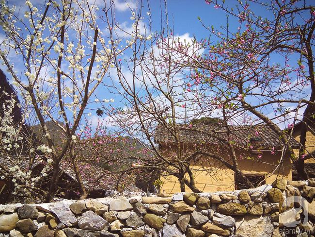Ngẩn ngơ ngắm sắc trắng, sắc hồng của hoa mận, hoa đào ở Hà Giang - Ảnh 3.