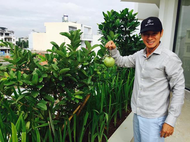 Khu vườn trên sân thượng xanh mướt mát, ăn mãi chẳng hết rau sạch của gia đình Lý Hải - Minh Hà - Ảnh 14.