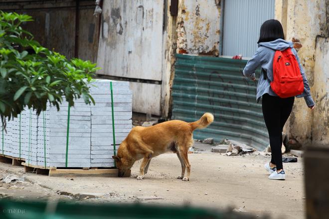 Hà Nội: Chó vẫn thả rông, không rọ mõm trước ngày luật bắt chó có hiệu lực - Ảnh 3.