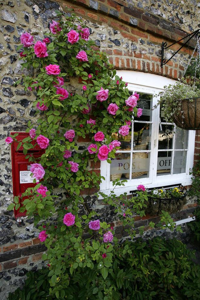 Mãn nhãn với những ngôi nhà có dàn hoa leo, ai đi qua cũng phải dừng chân ngắm nhìn - Ảnh 3.