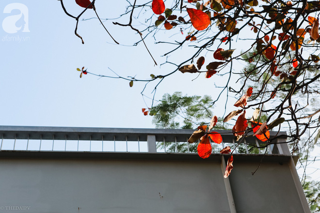 Hà Nội đẹp như thơ trong những ngày đông có nắng - Ảnh 3.