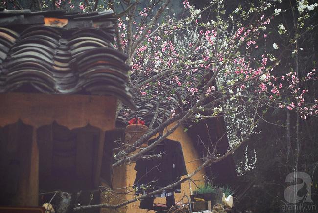 Ngẩn ngơ ngắm sắc trắng, sắc hồng của hoa mận, hoa đào ở Hà Giang - Ảnh 4.
