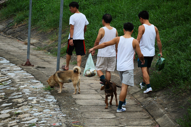 Hà Nội: Chó vẫn thả rông, không rọ mõm trước ngày luật bắt chó có hiệu lực - Ảnh 4.